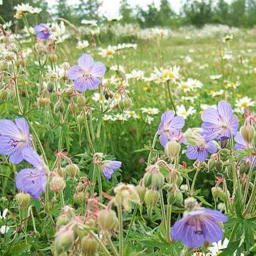 Wildflowers at Eden Valley Woodland Burial Ground in Kent